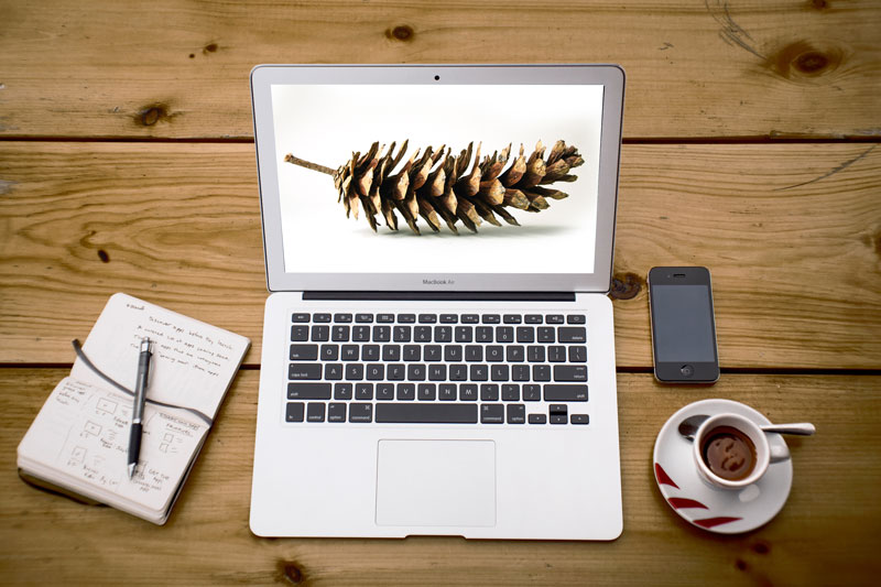 pinecone-zen-website-design